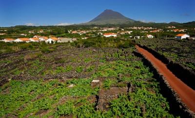 Paisagem da Cultura da Vinha da Ilha do Pico vence Prémio Nacional da Paisagem de 2018