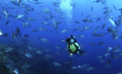 Açores nomeados como melhor destino do mundo para mergulho nos World Travel Awards 2019
