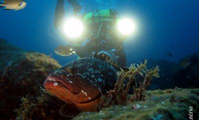 Património cultural subaquático dos Açores recebe classificação europeia